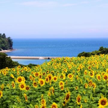 大阪のサプライズプロポーズ 長崎鼻リゾートキャンプ場