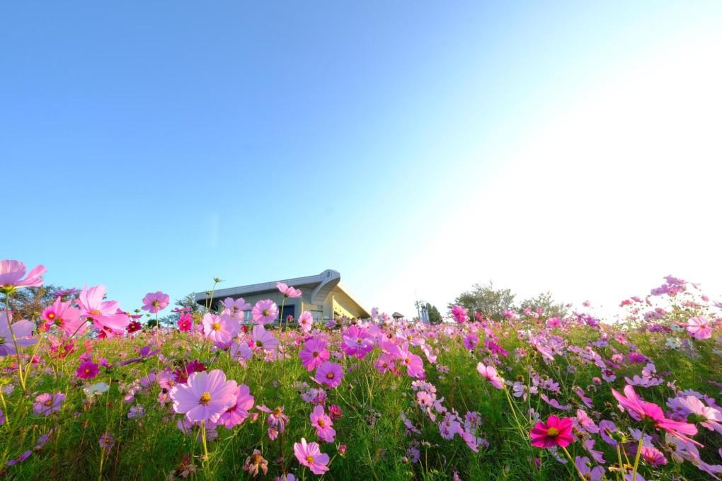 和歌山でプロポーズするなら鷲ヶ峰コスモスパーク