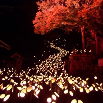 大阪のサプライズプロポーズ たけた竹灯籠 竹楽
