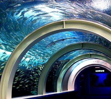 大阪のサプライズプロポーズ 浅虫水族館