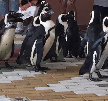 大阪のサプライズプロポーズ 京都水族館