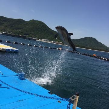 大阪のサプライズプロポーズ 日本ドルフィンセンター