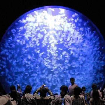 大阪のサプライズプロポーズ 加茂水族館
