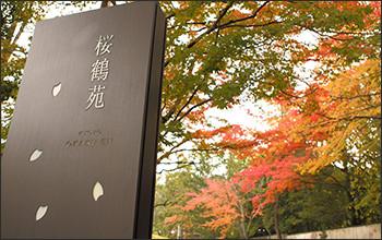 大阪のサプライズプロポーズ 桜鶴苑