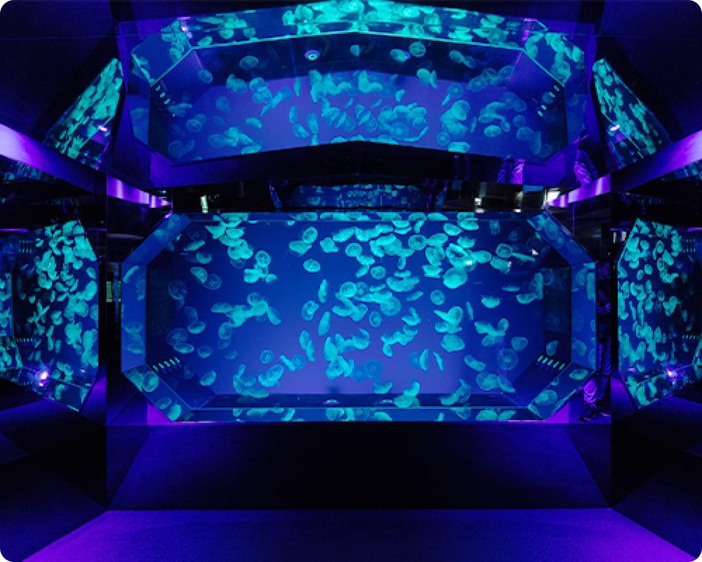 名古屋でプロポーズするなら名古屋港水族館