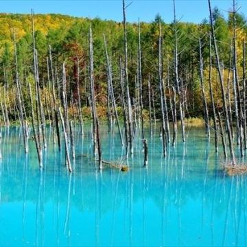 大阪のサプライズプロポーズ 美瑛の青い池