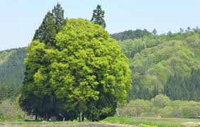大阪のサプライズプロポーズ トトロの森