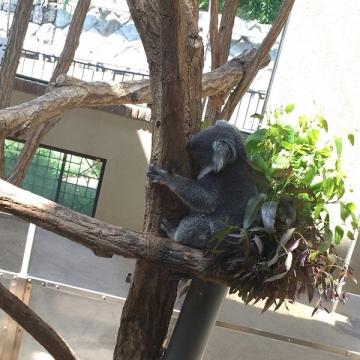 大阪のサプライズプロポーズ 神戸市立王子動物園