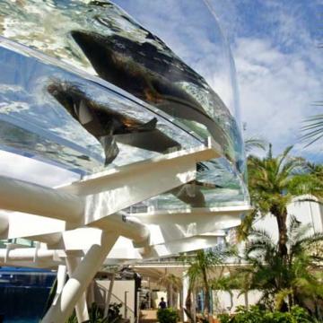 大阪のサプライズプロポーズ サンシャイン水族館
