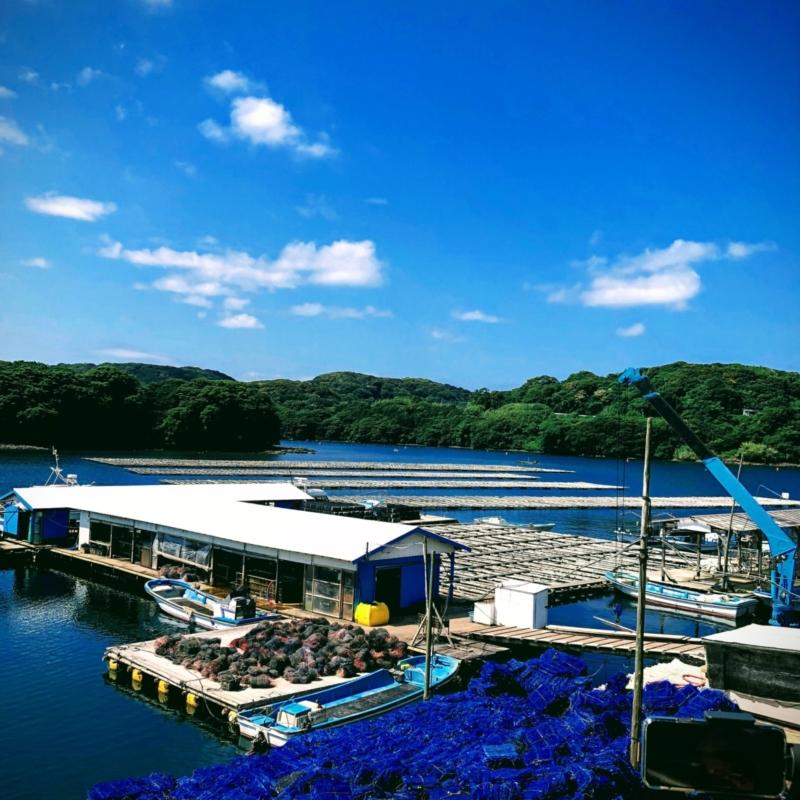 WAKANAを生産する上村真珠の海