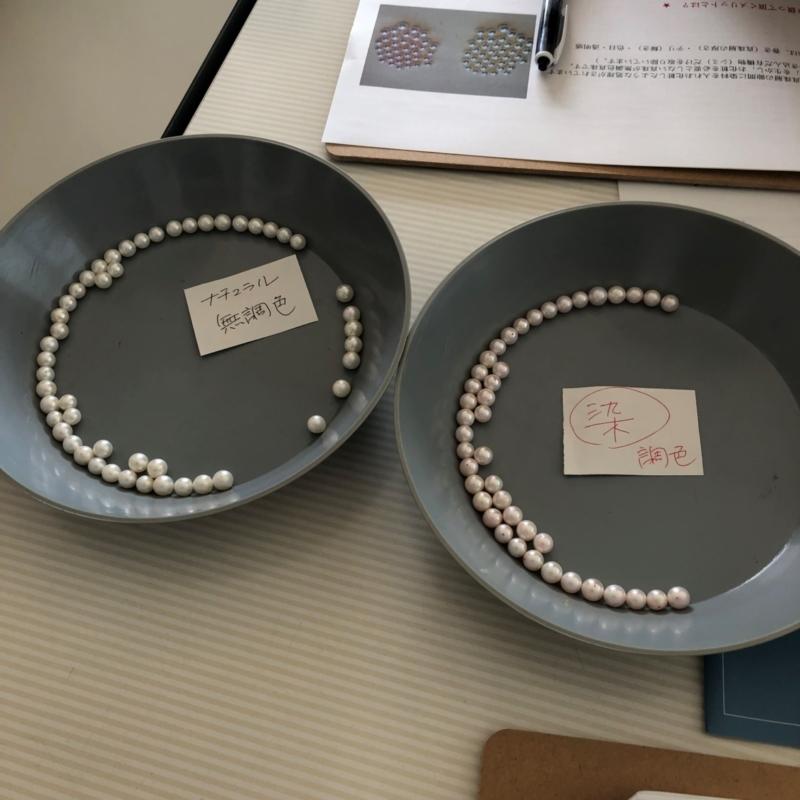 無調色真珠と調色真珠の稚貝