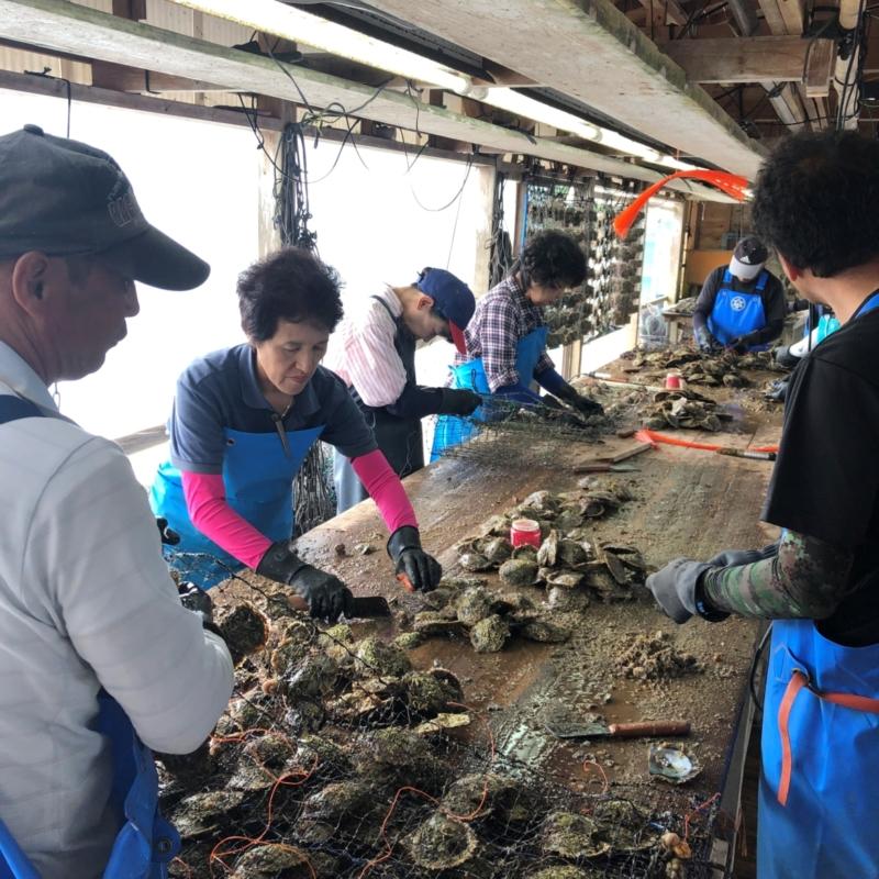 WAKANAワカナの貝の洗浄風景